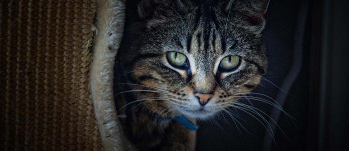 Gatto-romanzo-polvani