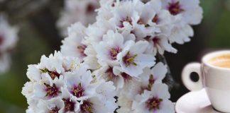 fiorire d'inverno - photo #18